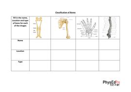 GCSE PE – Skeleton – Skeletal System - Unit of Work - Worksheet,  Powerpoint, Exam Questions – IGCSE