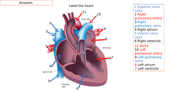 Answers to the heart quiz | Teaching Resources