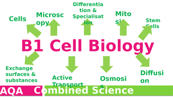 B1-Cell-Biology-revision.pptx