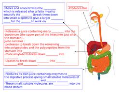 digestions-sheet.ppt