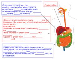 digestions-sheet-easier.ppt