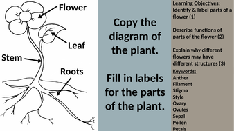Flower structure function by donber1 teaching resources tes flower structure function ccuart Image collections