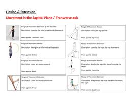Range-of-motion-worksheet-answers.docx