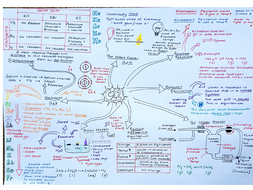 Cc12 Revision Mindmap Groups Of Periodic Table And Equilibria By