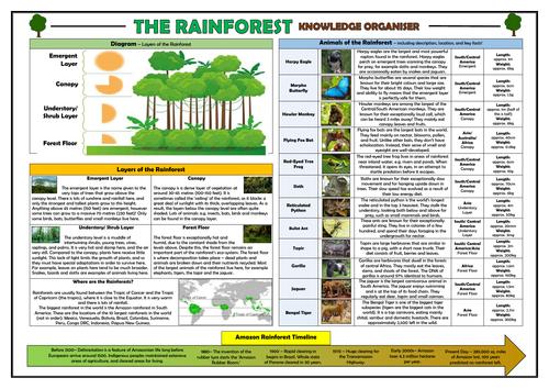 Rainforests KS2 Knowledge Organiser!