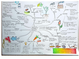 Sb9 Revision Concept Map Ecosystems Edexcel 9 1 Biology By