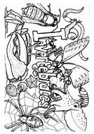 invertebrates-colouring.pdf