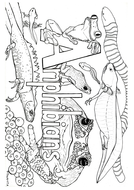 Animal Classification Colouring/ Activity Sheets