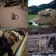 preview-for-farm-animal-photos-3.jpg
