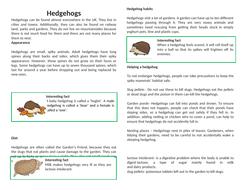 Non-chron-hedgehogs-features.docx