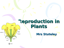 Reproduction in Plants for iGCSE