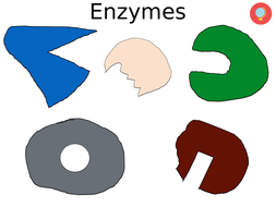 Lesson and resources on enzymes AQA GCSE