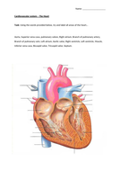 3.-Label-the-heart-(1).docx