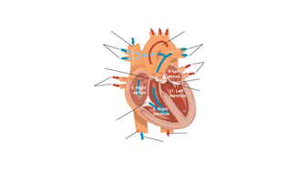 Unlabelled Heart Diagram Gcse ~ DIAGRAM