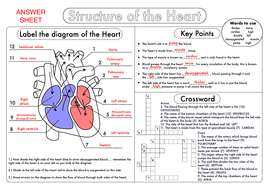 GCSE Biology: Heart Structure Worksheet Pack by beckystoke ...
