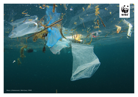 WWF-Oceans-and-Plastics-KS2-Activity2-Photos-to-print-1.pdf