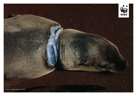 WWF-Oceans-and-Plastics-KS2-Activity2-Photos-to-print-4.pdf