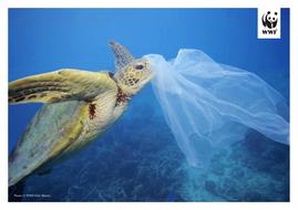WWF-Oceans-and-Plastics-KS2-Activity2-Photos-to-print-2.pdf