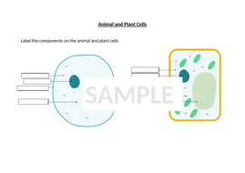 Animal and Plant cells - Year 7/KS3   Teaching Resources