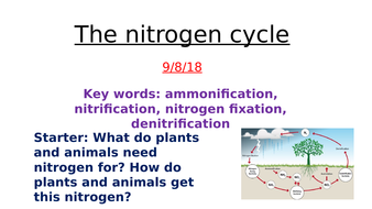 The nitrogen cycle a level biology by zuba102 teaching resources the nitrogen cycle a level biology ccuart Image collections