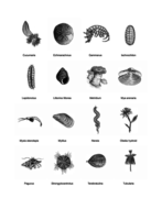COMMON-MARINE-LIFE-OF-THE-NORTH-ATLANTIC-Article_Page_4.jpg