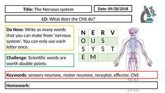 AQA GCSE Biology New Specification - B5 The Nervous system