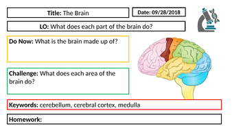 AQA GCSE Biology New Specification - B5 The Brain