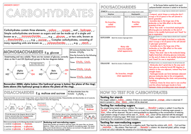 A Level Biology: Carbohydrates Summary Worksheet by beckystoke ...