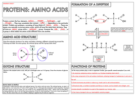 A Level Biology Amino Acids Protein Structure Summary Worksheets