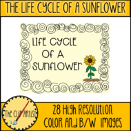 THE-LIFE-CYCLE-OF-A-SUNFLOWER-4.png