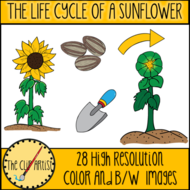 THE-LIFE-CYCLE-OF-A-SUNFLOWER-1.png