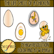 THE-LIFE-CYCLE-OF-A-CHICKEN-1.png