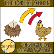 THE-LIFE-CYCLE-OF-A-CHICKEN-2.png