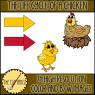 THE-LIFE-CYCLE-OF-A-CHICKEN-3.png