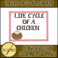 THE-LIFE-CYCLE-OF-A-CHICKEN-4.png