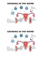 Growing-in-the-Womb-Diagram.docx