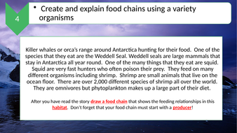 Food-Web-Comprehension-Task-(differentiated).pptx