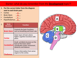 Structure and Function of the Brain - Localisation of ...