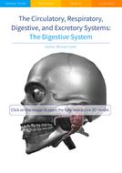 The-Digestive-System.pdf