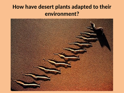 How-have-desert-animals-and-plants-adapted-to.pptx