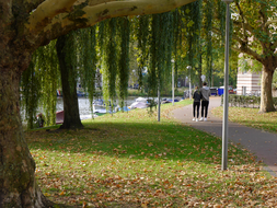 Walking under the plane trees - Fall in Amsterdam City; mid October - c 11.30 o'clock.JPG