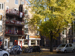 City-tree with shadows and light on the facades - Autumn in Amsterdam city; end of October - 14.30 afternoon.JPG