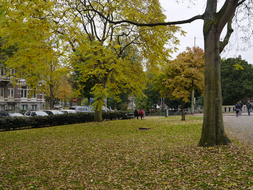 Yellowing Trees - Fall in Amsterdam City; 1 November, 15.00 afternoon.JPG