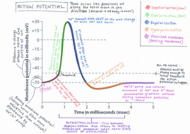 4.-Action-potential-annotated-graph.jpg