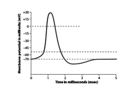 4.-Action-potential-graph.docx