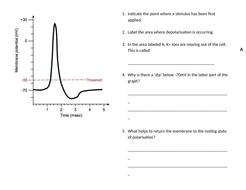 Quiz---Action-potential.docx