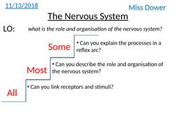 L2-The-nervous-system.pptx