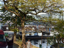 photo 'Trees in early Fall', near the houseboats along the quay of the Oosterdok water; Mid October - 1 o'clock afternoon; Amsterdam city.JPG