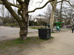 photo 'Skinny plane trees, waiting for their leaves' with wide branches for catching masses of light in the Vondelpark, early April - 3 o'clock afternoon; Amsterdam city.jpg