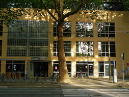 photo 'Late sunlight and shadows under the plane trees', at the Roeterstraat in Amsterdam city; early September - 8 o'clock early evening.JPG